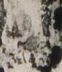 http://hng.chise.org/images/iiif/zinbun/takuhon/kaisei/H1002.tif/5357,3111,88,103/full/0/default.jpg